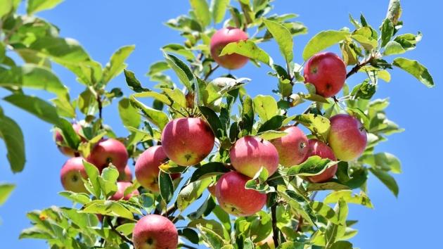 Apfel(Ernte) – Workshop & Fest